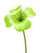Young green four leaf sprout