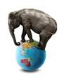 elephant australia globe