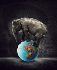 elephant on world