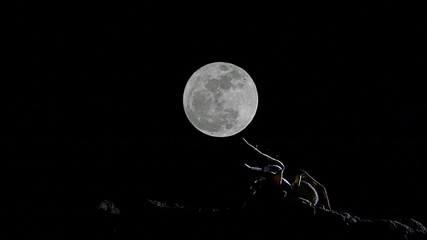 wolf spider timelapse with moon moving