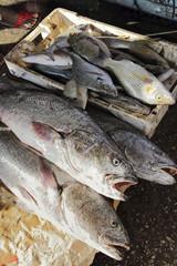 poissons frais (port de Mbour)
