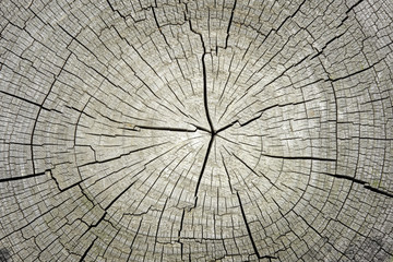 Macro  of   tree  cross section  background