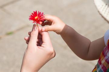 雛菊を手渡す親子の手