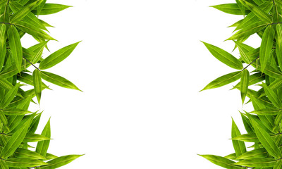bamboo leaves isolated on white background, design for border