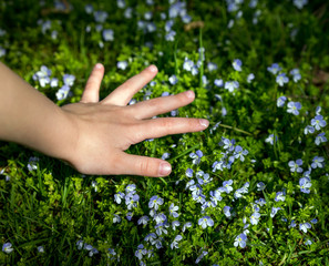 Child's hand collects flowers