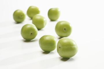 """Kirschpflaumen(Prunus cerasifera ) """"Kann Erik """",close-up"""