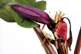 Bananenpflanze ( Musa ),close-up poster