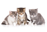 three kittens together - 65203757