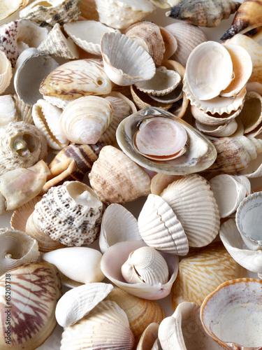 Sea shells on sand. Summer beach background.