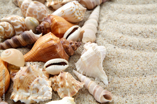 Sea shells on sand. Summer beach background. - 65203784
