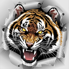 Tiger Roar coming out from Torn Paper