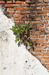 Italien, Pflanzenzucht auf Mauer , close up