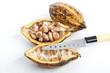 canvas print picture - Cacao Pflanze, Schale , Bohnen und Messer