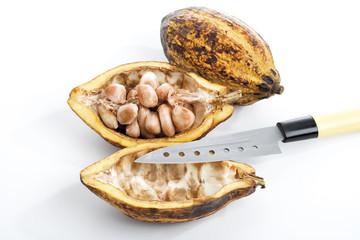 Cacao Pflanze, Schale , Bohnen und Messer