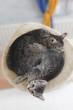 Hauskatzen,Katze und Kätzchen auf Kratzbaum liegen,erhöhte Ansicht