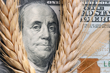 Wheat spikelet on one hundred dollars