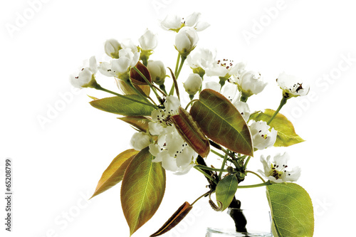 Tuinposter Olijfboom Blüten der Nashi- Birne (Pyrus pyrifolia ) , close-up
