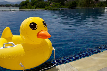 Rubber ring duck in swimming pool.