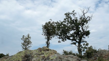 Cloudy Time Lapse in rocky mountain. Tree foreground. 1080p