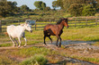 Horses running in a green field
