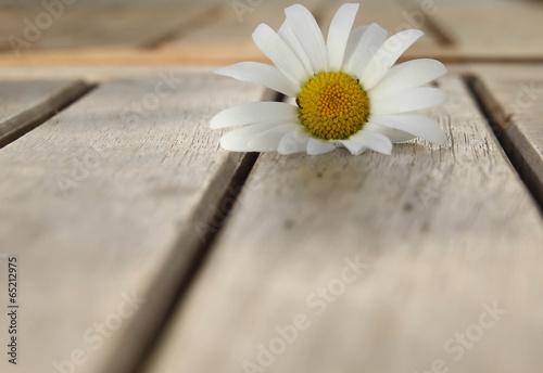 canvas print picture Blumen