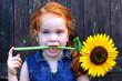 Rotschopf mit Sonnenblume