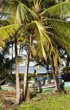fishing boats  palm tree Caribbean Sea  Big Corn Island Nicaragu