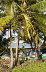 fishing boats  palm tree Caribbean Sea  Big Corn Island Nicaragu