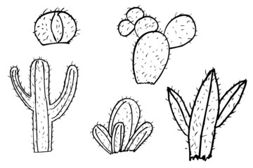 hand draw sketch of cactus