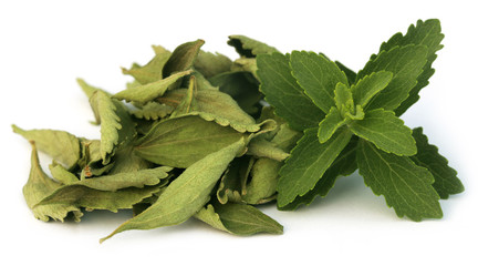 Green and dired Stevia leaves