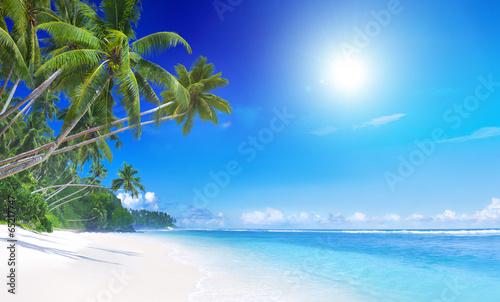 Tropical Paradise - 65217747