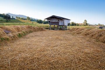 Hut in the terrace rice field
