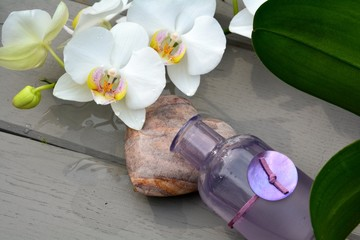Auszeit - Orchidee