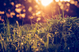 Green grass background macro