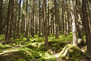Wandern Harz 2