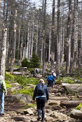 Wandern Harz Steine