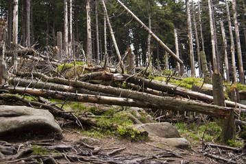 Wandern Harz Bäume