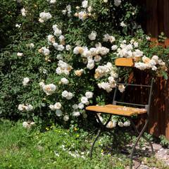 Stuhl mit Kletterrose im Garten