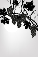 black vines on grey background