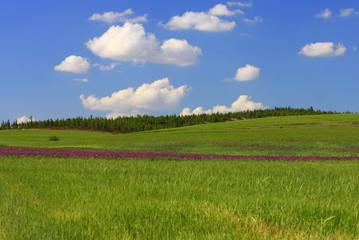 Champs, fleurs et ciel bleu