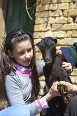 Little goat in the farm