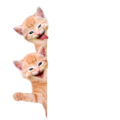 zwei Katzen lachend und winkend