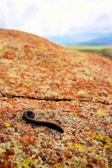 Millipedes on a Mountain