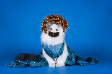 cat with a mustache and beard in a dress