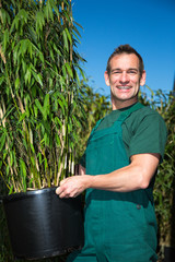 Gärtner präsentiert Bambus in Gärtnerei