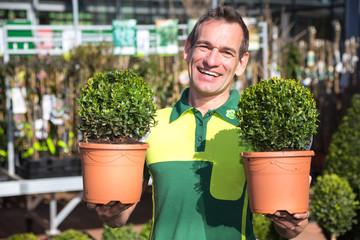Gärtner präsentiert Buchsbäume in Gärtnerei