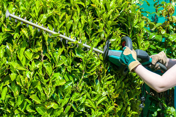 Trimming the Bushes