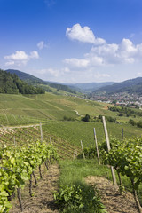 View over vineyard overlooking a small village