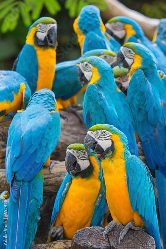 Papiers peints Chambre bébé group of colorful macaws