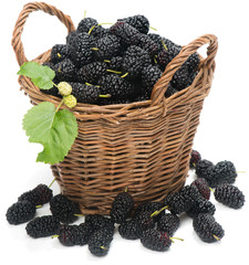 Basket of mulberries